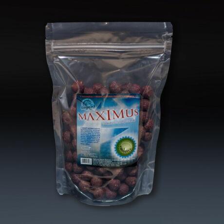 Maximus Kagyló